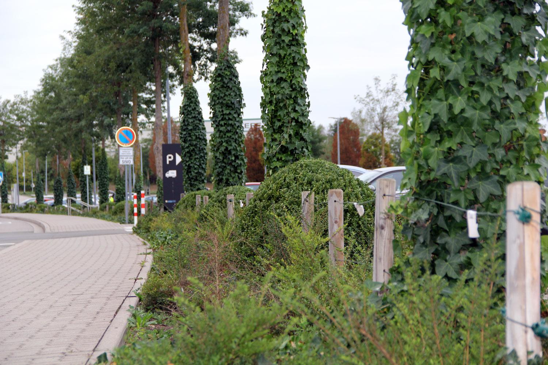 parkplatz-bepflanzung